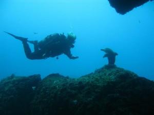 Middellandse zee duiker