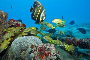 Fredericksted Pier underwater