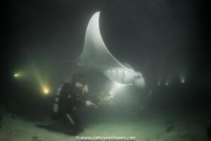 Malediven manta
