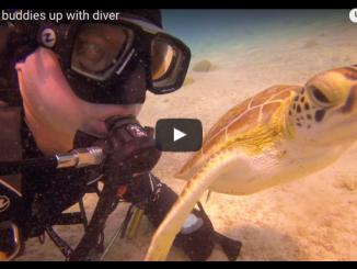 video screenshot Michael en schildpad